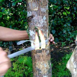 Topping Tanaman Aneka Rasa Agar Berhasil