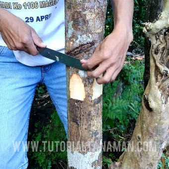 Topping Tanaman